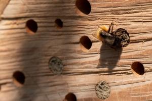 nisthilfe_wildbienen